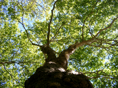 Repurposing Content: Eleven Ways To Grow Your Content Tree™ And Gain Visibility For Your Business