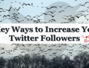 How to Increase Your Twitter Followers (Without Buying Them!)